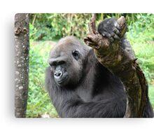 """Gorilla""  by Carter L. Shepard Canvas Print"