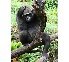 """""""Gorilla 1""""  by Carter L. Shepard Photographic Print"""