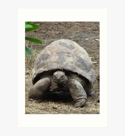 """Tortoise""  by Carter L. Shepard Art Print"