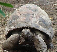 """""""Tortoise""""  by Carter L. Shepard by echoesofheaven"""