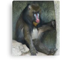 """""""Baboon""""  by Carter L. Shepard Canvas Print"""