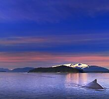 Humpback Solitude by Paul Wolf