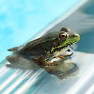 Olympic Frog~ by Renee Blake