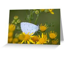 Holly Blue Greeting Card