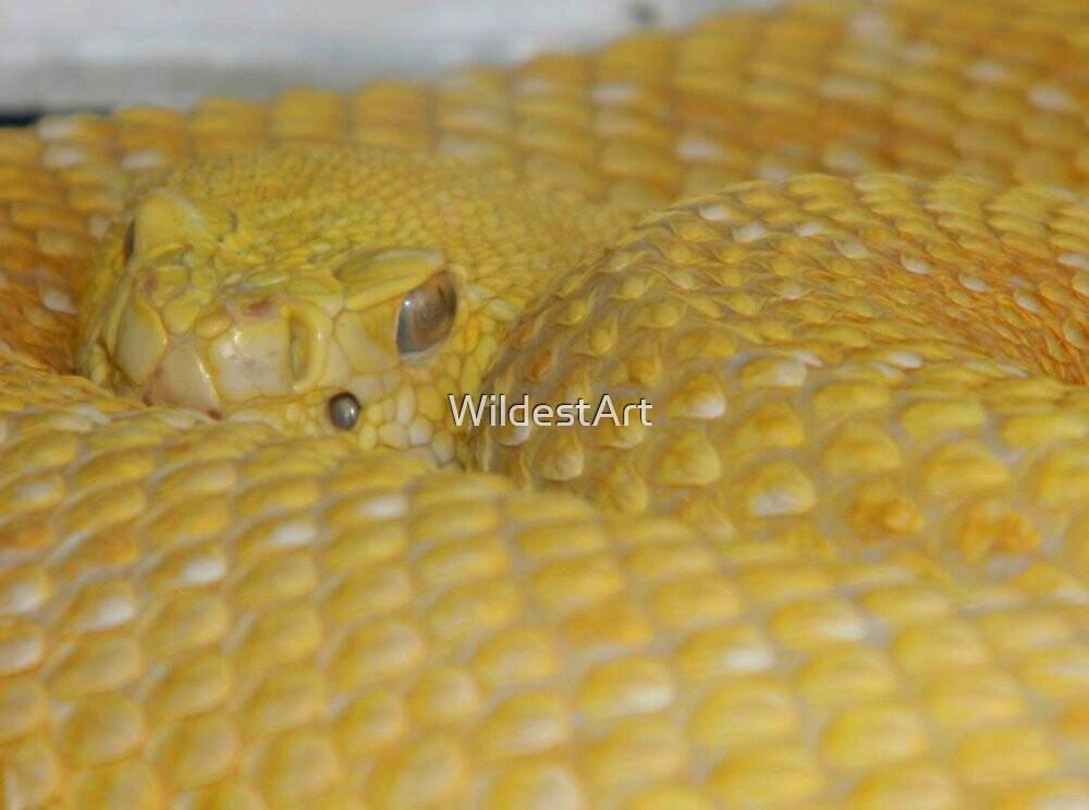 Albino Rattlesnake by WildestArt