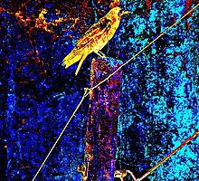 Crow On A Wire by SianStargazer