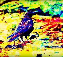 Crow on Rocks by SianStargazer