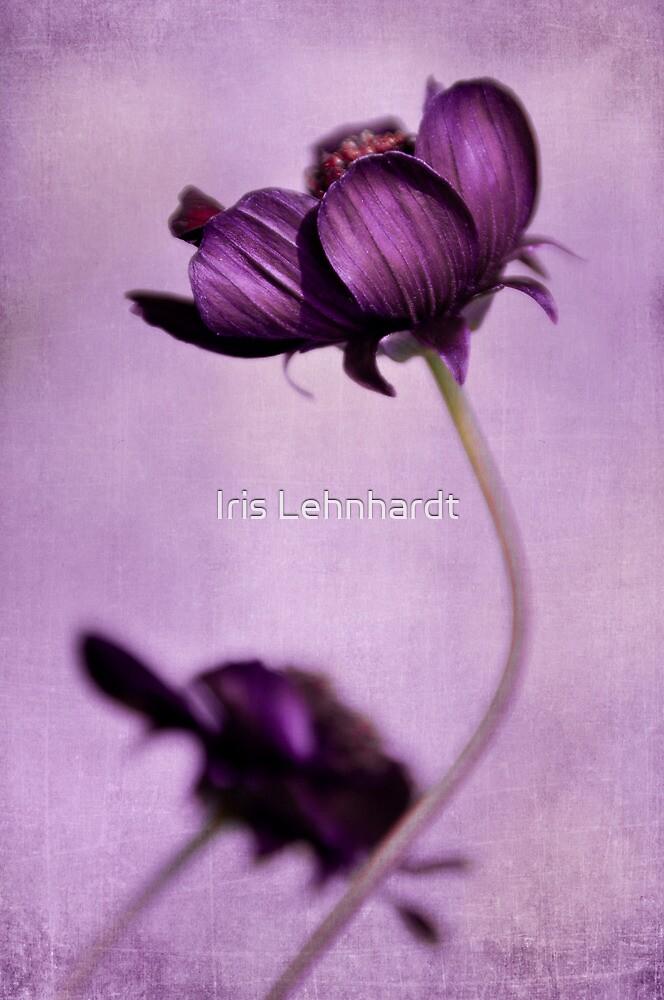 purple blossoms by Iris Lehnhardt