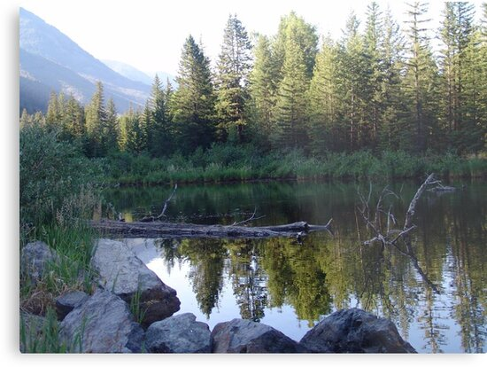 BEAVER POND ON THE BOULDER by May Lattanzio