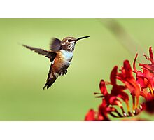 Feathered Dancer Photographic Print