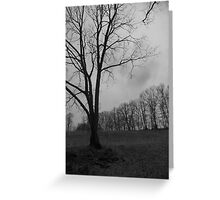 Bare Tree Against the Sky  Greeting Card