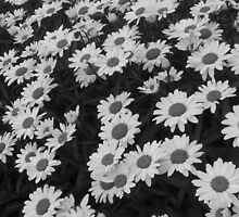 Daisies by elizabethtarde