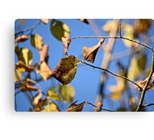 Yellow and Brown Canvas Print