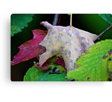 Leaves of Green, brown and red Canvas Print