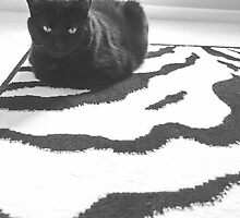 Francis on Zebra Rug by Juli Cady Ryan