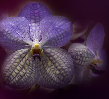 Orchid by EbyArts
