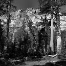 Ten Lakes Basin - Yosemite N.P. by Rodney Johnson