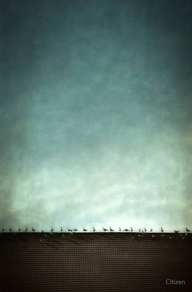 Birds on a hot tile roof by Nikki Smith