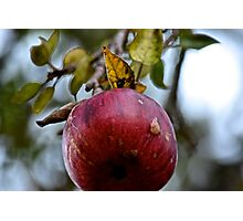 The Ripe Apple Photographic Print