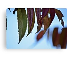 leaves for fall Canvas Print