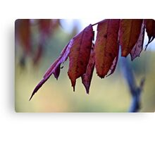 the last of the leaves Canvas Print