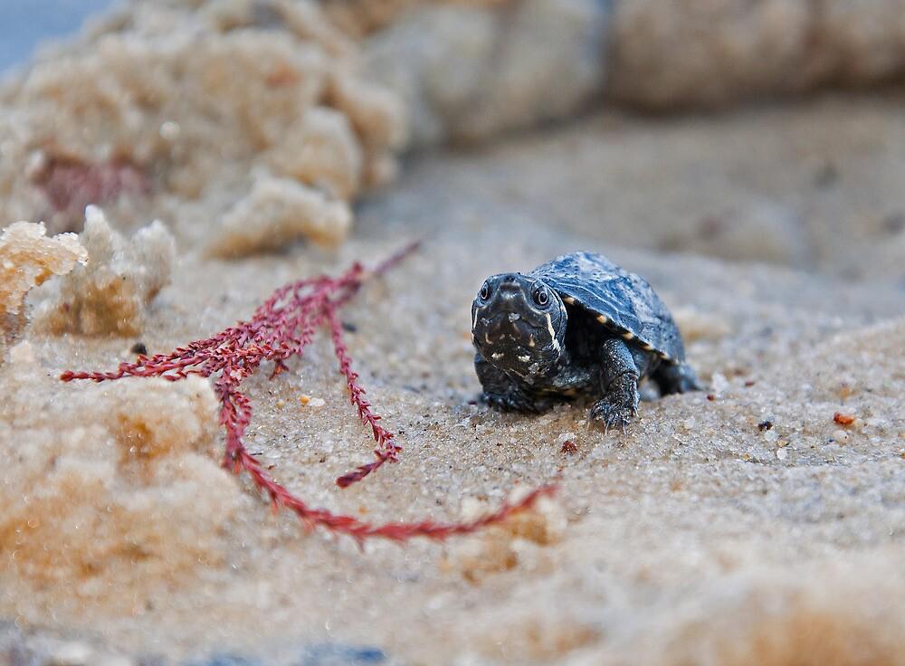 Baby Turtle by BrianDawson