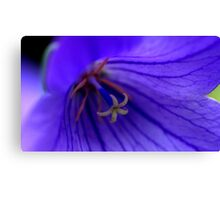 A Flower within a Flower............... Canvas Print