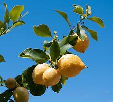 Lemons against blue sky by LindaCooke