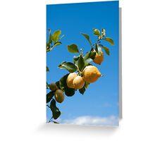 Lemons against blue sky Greeting Card