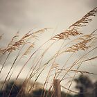 Wild Oats to Sow by cmcdonald