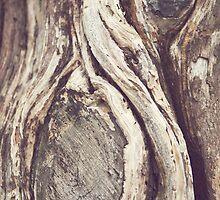 Tree Swirls by cmcdonald