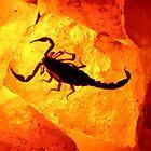 Scorpion on salt rock by James Harmon