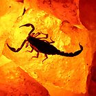 Scorpion on salt rock by James Harmon
