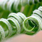 hairy curls by yvesrossetti