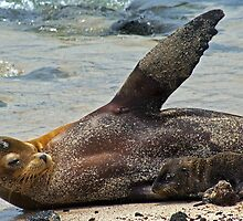 Sea Lion & Pup7 by bulljup