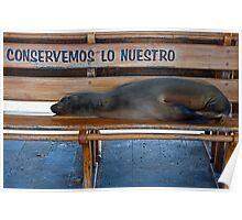 Sea Lion & Pup8 Poster