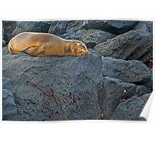 Sea Lion8 Poster