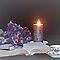 Lavender Still Life - Lovely Lavender Group