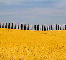 Toscana landscape - Italy by RAN Yaari