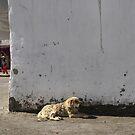 In Karakul, the sun is bright by Marjolein Katsma