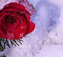 Winter Love by Deborah McLain