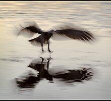 Osprey 434 by John Van-Den-Broeke