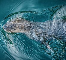 River Otter by toby snelgrove  IPA