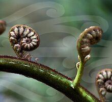 Unfolding life..Fern Frongs by Hinemaukurangi Simpson
