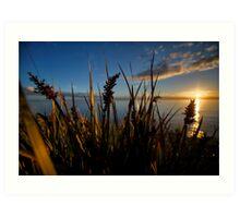 Reeds Art Print