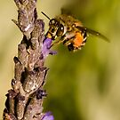 To bee or not to bee by Anton Alberts