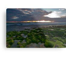 Seaweed Craters Metal Print