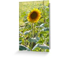 Biltmore Sunflower Greeting Card