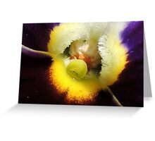 Pansy Flower 01 Greeting Card