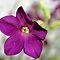 Lavender Flower - Lovely Lavender Grooup